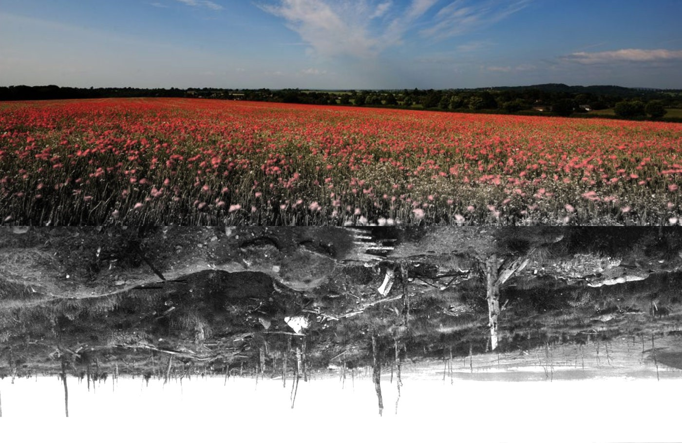 contrasting image of Flanders Fields in war and peace